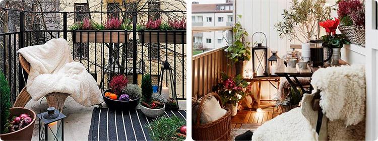 Как сохранить цветы на балконе зимой